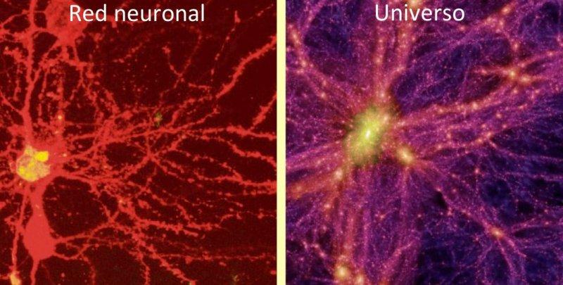Cerebro y Universo. La electricidad es vida