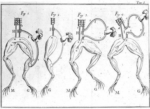 Experimentos de Galvani con ranas