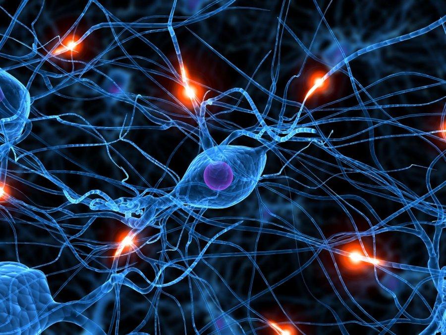 Impulsos eléctricos a través de las neuronas